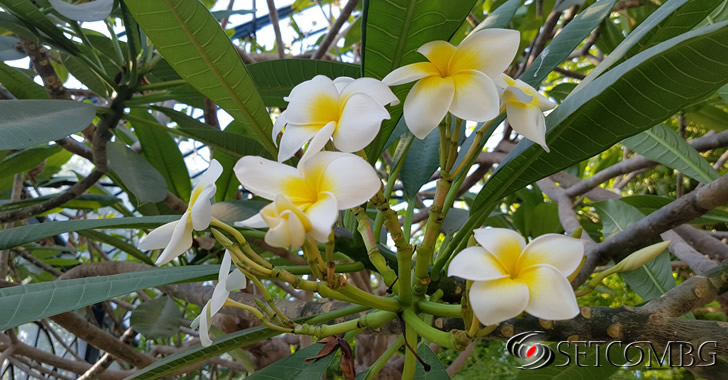 Samsung S7 Edge shot - Palermo botanical